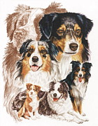 Purebred Drawings - Australian Shepherd w/Ghost by Barbara Keith