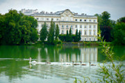 Salzburg Posters - Austrian Chateau with Lake and Swans Poster by Carol Groenen