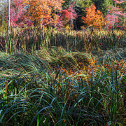 Autumn Foliage Prints - Autmn in the Swamp Print by Bill  Wakeley