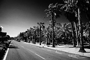 Tree Lines Photo Posters - Autovia Reus Salou Near Placa Europa Main Street Catalonia Spain Poster by Joe Fox