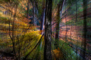 Landscape Photography Photos - Autumn Abstract by Bruce Siulinski