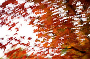 Katina Borges - Autumn Abstract