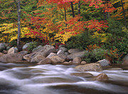 New Hampshire Fall Foliage Prints - Autumn Along Swift River  Print by Tim Fitzharris