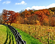 Vine Leaves Framed Prints - Autumn Amish Vineyard Framed Print by Robert Harmon