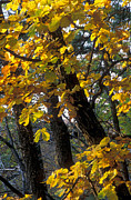 Fall Colors Autumn Colors Metal Prints - Autumn Metal Print by Anonymous