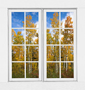 Room With A View Framed Prints - Autumn Aspen Forest White Window Frame View Framed Print by James Bo Insogna