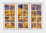 Picture Window Frame Photos Art - Autumn Aspen Trees White Picture Window View by James Bo Insogna