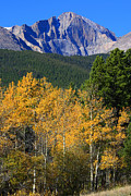 Longs Peak Posters - Autumn Aspens and Longs Peak Poster by James Bo Insogna