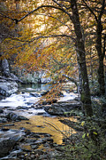 Debra and Dave Vanderlaan - Autumn at Citico Creek