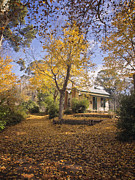 Kim Andelkovic - Autumn at Daylesford