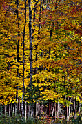 Fir Trees Photos - Autumn at Eagle Bay by David Patterson