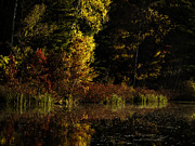 Reds Of Autumn Metal Prints - Autumn At Its Finest Metal Print by Thomas Young
