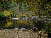 Diane Schuster - Autumn At Lithia Park...