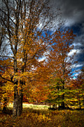 Sugar Photo Prints - Autumn at Mc Cauley Mountain Print by David Patterson