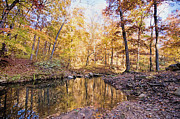 Ozark Mountains Photos - Autumn at the Longbow by Bonnie Barry