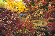 Fushia Prints - Autumn at the Park Print by Carrie Cole