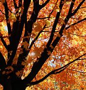 Kim Hojnacki - Autumn Beauty