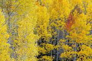Tam Ryan - Autumn Beauty