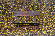 Gabor Szabo - Autumn bench