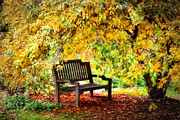 Turning Leaves Prints - Autumn Bench in the Garden Print by Lynn Bauer