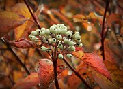 Neurotic Images Photography Prints - Autumn Berries Print by Chalet Roome-Rigdon