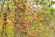 Photomanipulation Photo Prints - Autumn Berries Digital Paint Print by Debbie Portwood