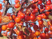 Loretta Pokorny - Autumn Berries