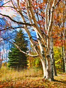 Christopher Arndt Metal Prints - Autumn Birch Metal Print by Christopher Arndt