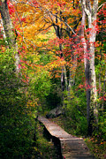 Fall Scenes Framed Prints - Autumn Boardwalk Framed Print by Bill  Wakeley