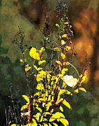 Autumn Landscape Mixed Media Posters - Autumn Bouquet Poster by Gerlinde Keating - Keating Associates Inc