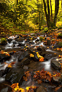 Stream Prints - Autumn Breeze Print by Mike  Dawson