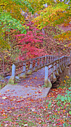 Kay Novy - Autumn Bridge