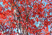 Autumn Brilliance V Print by Suzanne Gaff