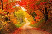 Leaf Tunnel Prints - Autumn Cameo Road Print by Terri Gostola