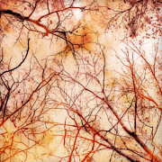 Manipulated Photography Framed Prints - Autumn Canopy Framed Print by Ann Powell