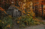 Shed Metal Prints - Autumn Canopy Metal Print by Robin-lee Vieira