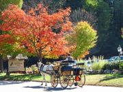 Wayside Inn Metal Prints - Autumn Carriage Ride Metal Print by Barbara McDevitt