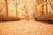 Central Park Photo Posters - Autumn - Central Park Elm Trees - New York City Poster by Vivienne Gucwa