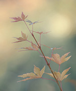 Leaf Change Photos - Autumn Changes by Angie Vogel