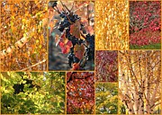 Grape Leaves Photo Framed Prints - Autumn Collage Framed Print by Carol Groenen