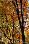 Tannis  Baldwin - Autumn Color 1