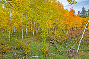 Fort Collins Art - Autumn Color by Keith Ducker