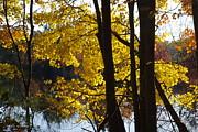 Tannis  Baldwin - Autumn color