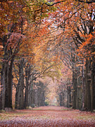 Colorful Photos Posters - Autumn - Colorful Red Green Orange Nature Landscape Fine Art Photography Poster by Artecco Fine Art Photography - Photograph by Nadja Drieling