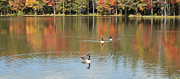 Kathy Rinker - Autumn Colors and Geese