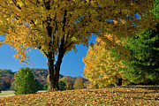 Franklin Tennessee Photo Prints - Autumn Colors Print by Brian Jannsen