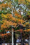 Autumn Colors Print by Carolyn Ricks