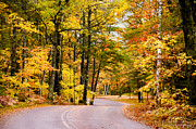 Kettle Moraine Posters - Autumn Colors - Colorful Fall Leaves Wisconsin - II Poster by David Perry Lawrence