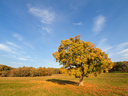 Oak Photos - Autumn colors by Davorin Mance