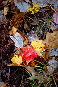 Signed Photo Prints - Autumn Colors - Fall Leaves in the Rain Wisconsin Print by David Perry Lawrence